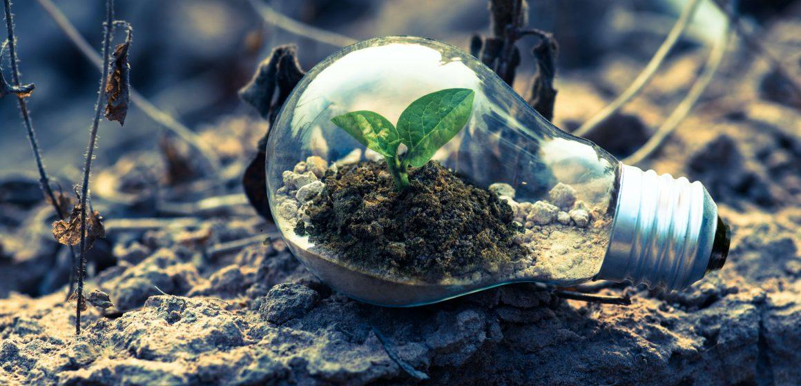 Żarówka z ziemią i rośliną w środku