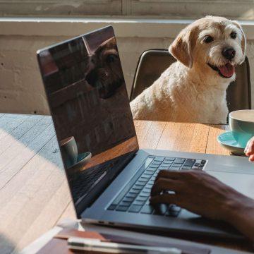 Zwierzęta w miejscu pracy. Czy to ma sens?